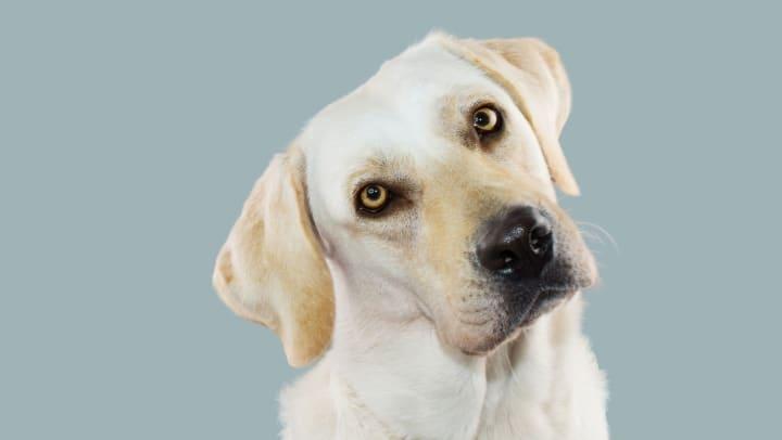 Cute dog at The Enclave in Brunswick, Georgia