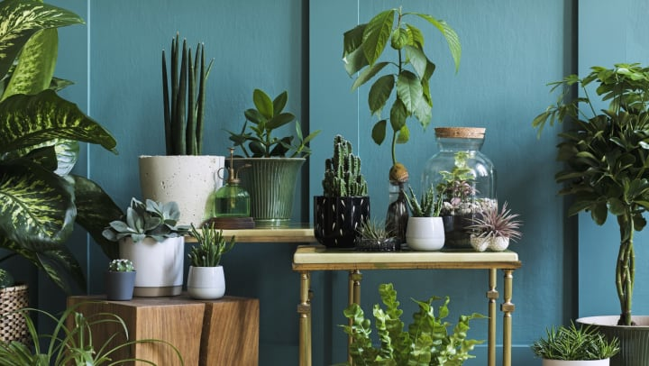 A collection of potted green plants in front of a green wall on a variety of tables and stools.