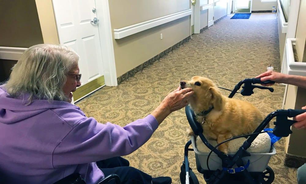 Resident feeding dog at Heron Pointe Senior Living in Monmouth, Oregon