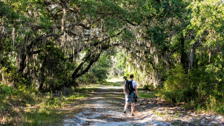 A man in shorts with a backpack walking along a shaded trail under a forest canopy with Spanish moss