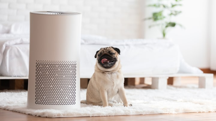 A white air purifier in a cozy white bedroom next to a smiling pug dog.