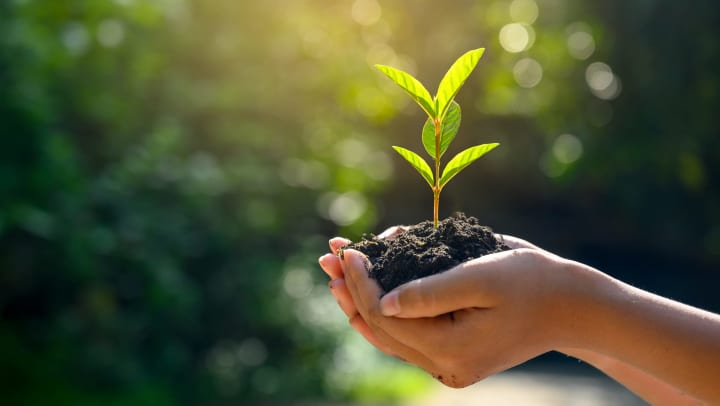 Hands holding a pile of dirt with a green sprout in front of an out of focus outdoor background.
