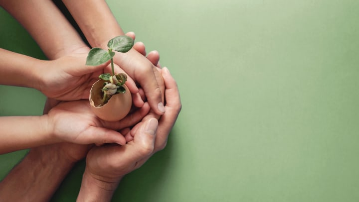 Hands holding seedling in eggshell