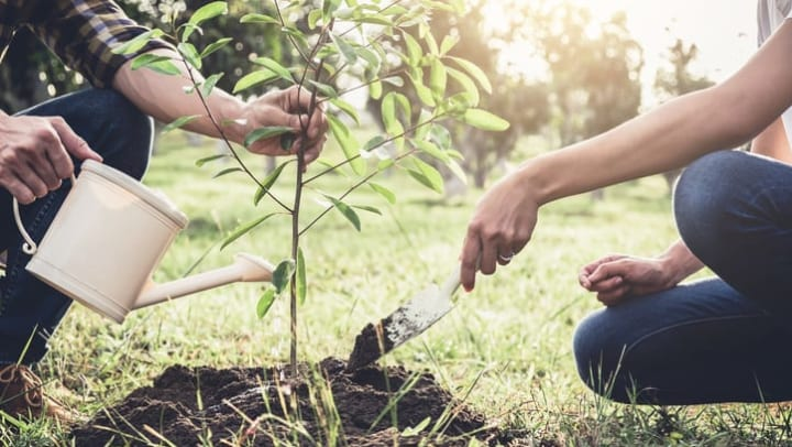 A man and woman plant a tree outside