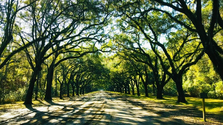 Beautiful street surrounded by curved trees near The Slate