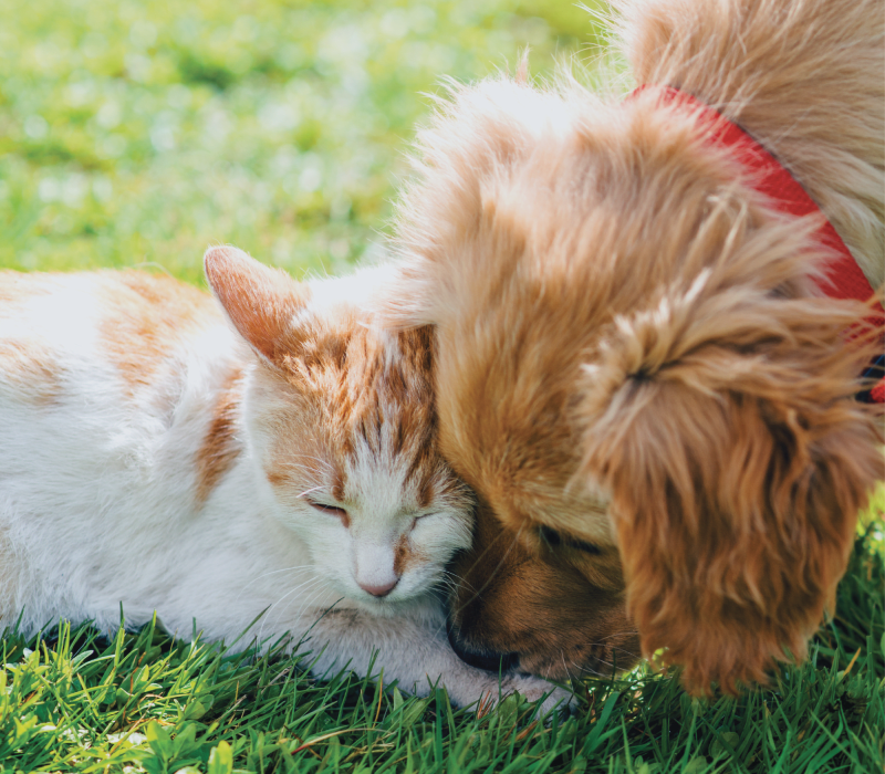 A dog and cat at Nightingale in Redmond, Washington