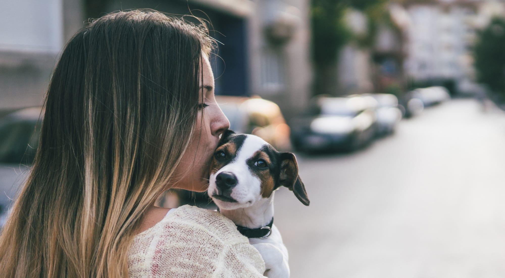 Pet-friendly apartments at Veranda La Mesa in La Mesa, California