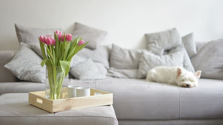 A bouquet of tulips on an ottoman and a grey sofa in the background with white dog napping.