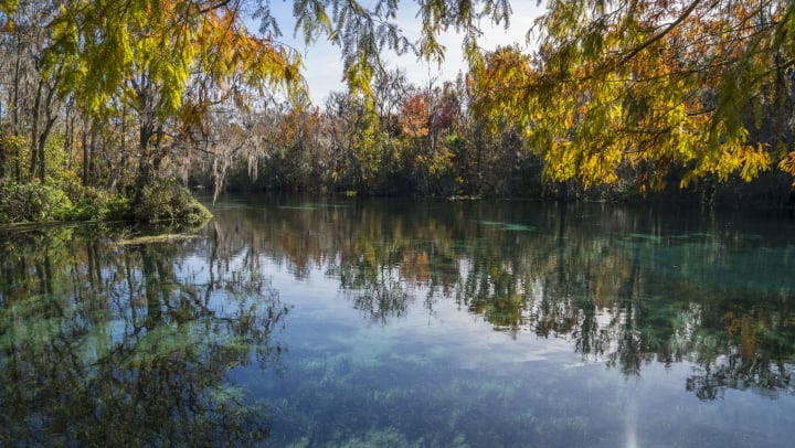 Picture of a colorful green, yellow, and orange foliage over calm blue-green water