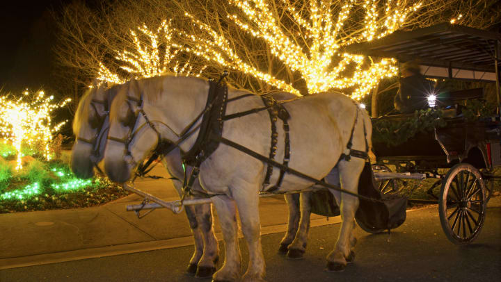 A horse-drawn carriage in front of festive holiday lights.