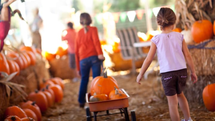 Two young girls pull a small wagon filled with pumpkins, through a pumpkin patch.