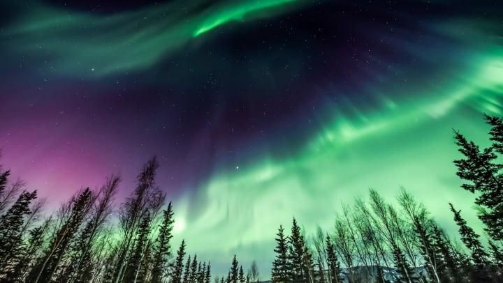 Aurora borealis over the tree line.
