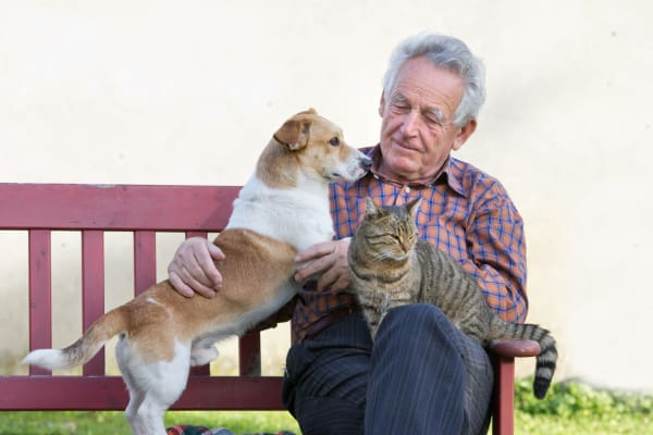 Man petting a cat and dog in Columbia near Discovery Village At Sandhill