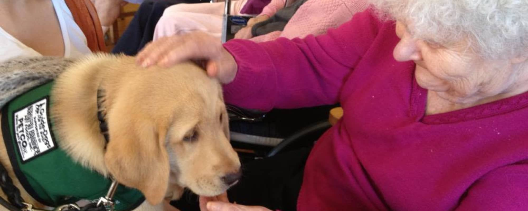 Senior petting puppy at MuirWoods Memory Care in Petaluma, California