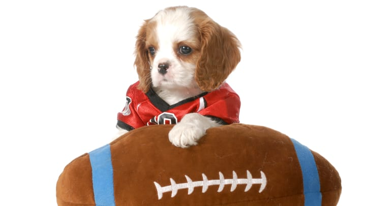 Cute puppy wearing a football jersey with its paw on a stuffed football