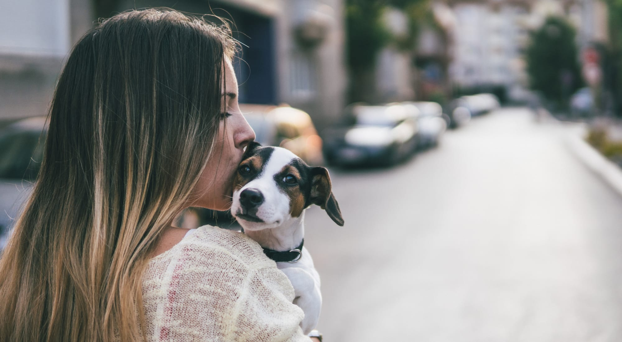 Pet-friendly apartments at Sofi Fremont in Fremont, California