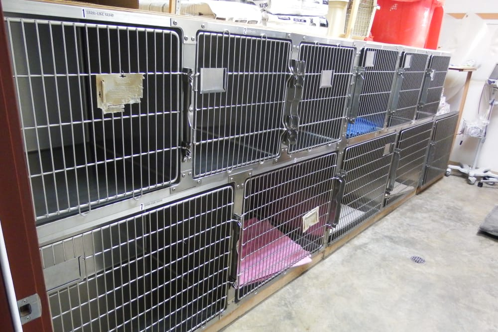 Boarding small dogs at Angeles Clinic For Animals in Port Angeles, Washington
