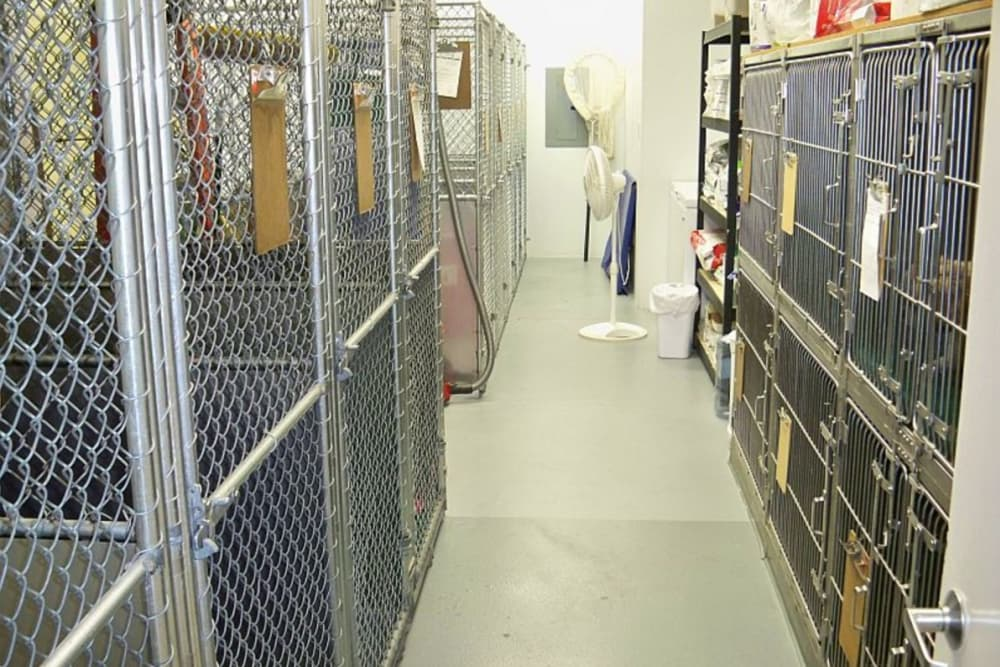 Kennels at Red Mountain Animal Hospital in Mesa, Arizona