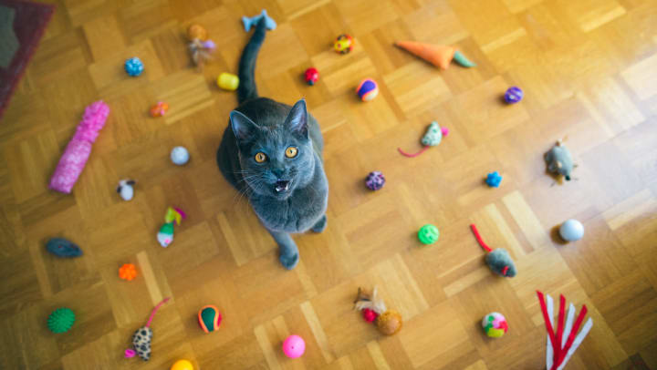 Happy cat showered in toys from a subscription service in her apartment home at Tacara at Westover Hills in San Antonio, Texas