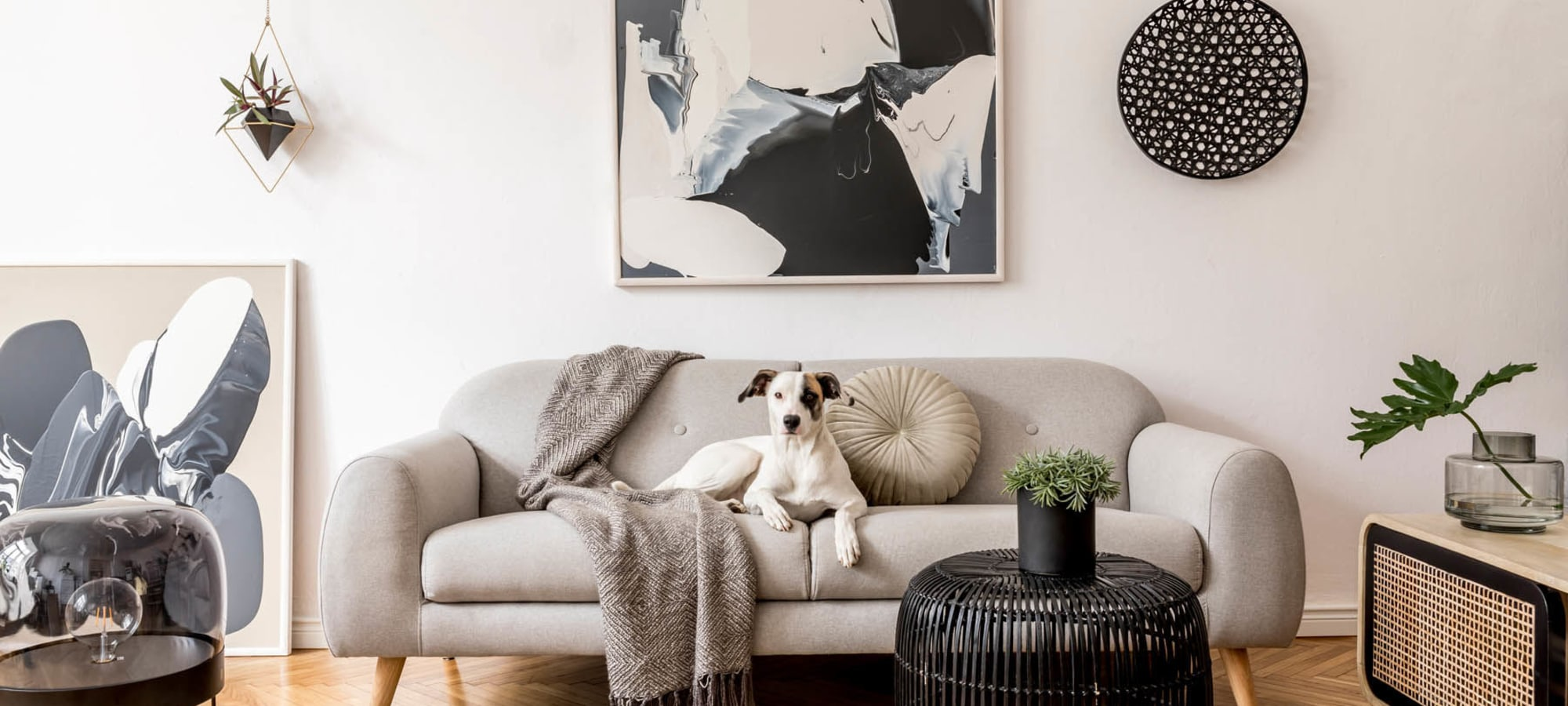 Classically furnished model home's living area with their dog on the couch at Heritage Plaza in San Antonio, Texas