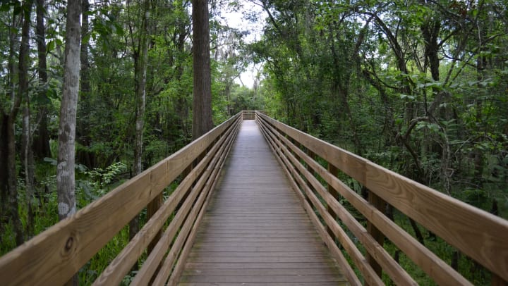Landscape view of a boardwalk surrounded by green forest