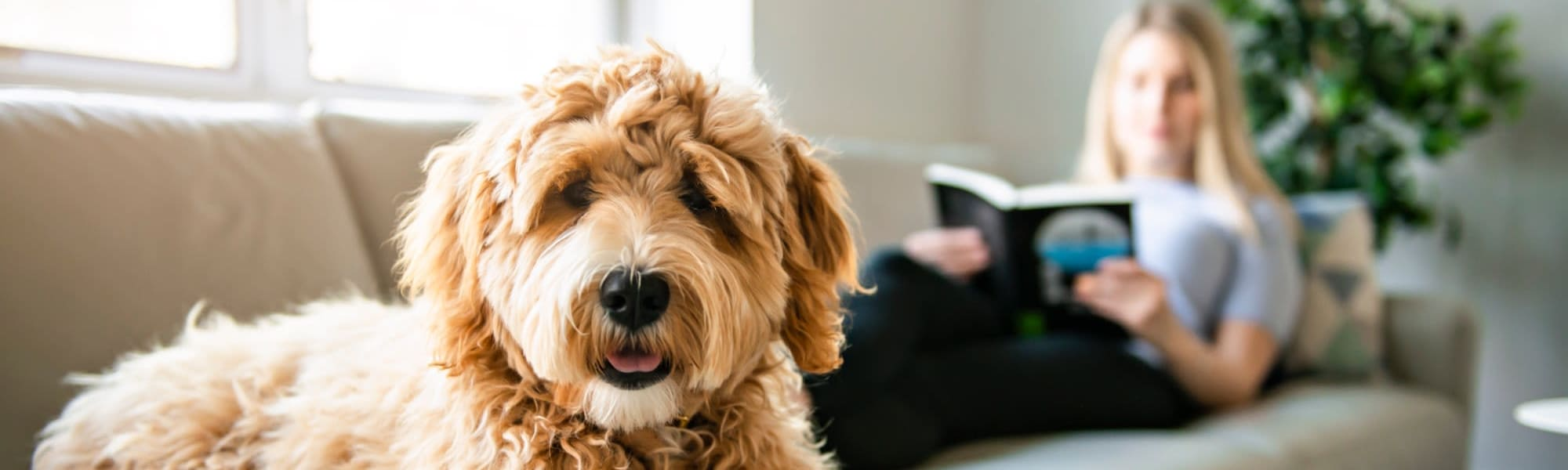Pet-friendly apartments at Domain at Founders Parc in Euless, Texas