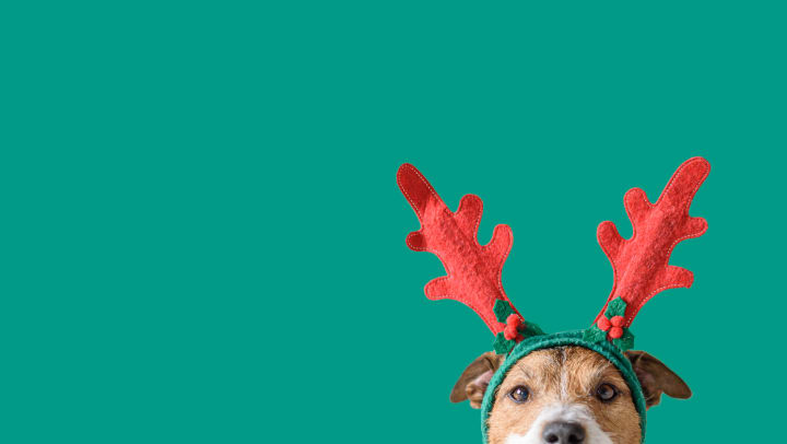 Christmas dog peeking into the frame wearing reindeer antlers on a green background