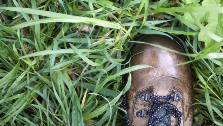 Brown hiking boot on green grass wet with moisture