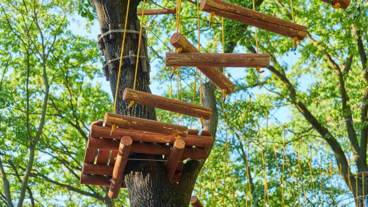 A rope bridge attached to a tree.