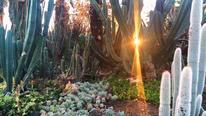 Botanical gardens near Redstone at SanTan Village in Gilbert, Arizona