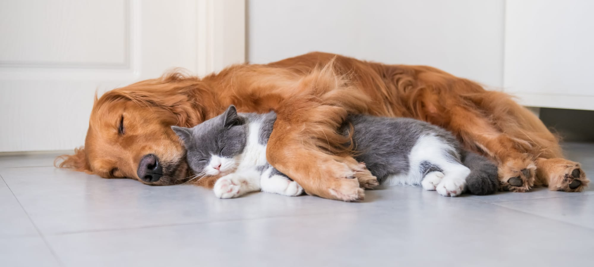 Pet Friendly apartments at Fusion in Jacksonville, Florida