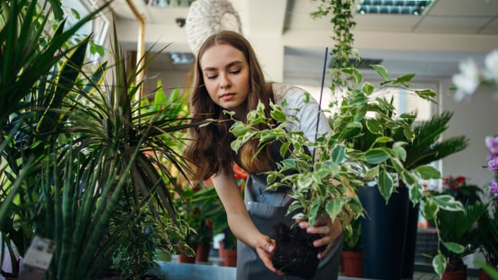 Young woman picking up a potted plant in a plant shop.