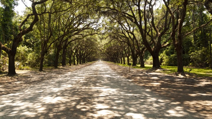 Skidaway Road, near Skidaway Island State Park in Georgia, is  lined with more than 400 live oak trees.
