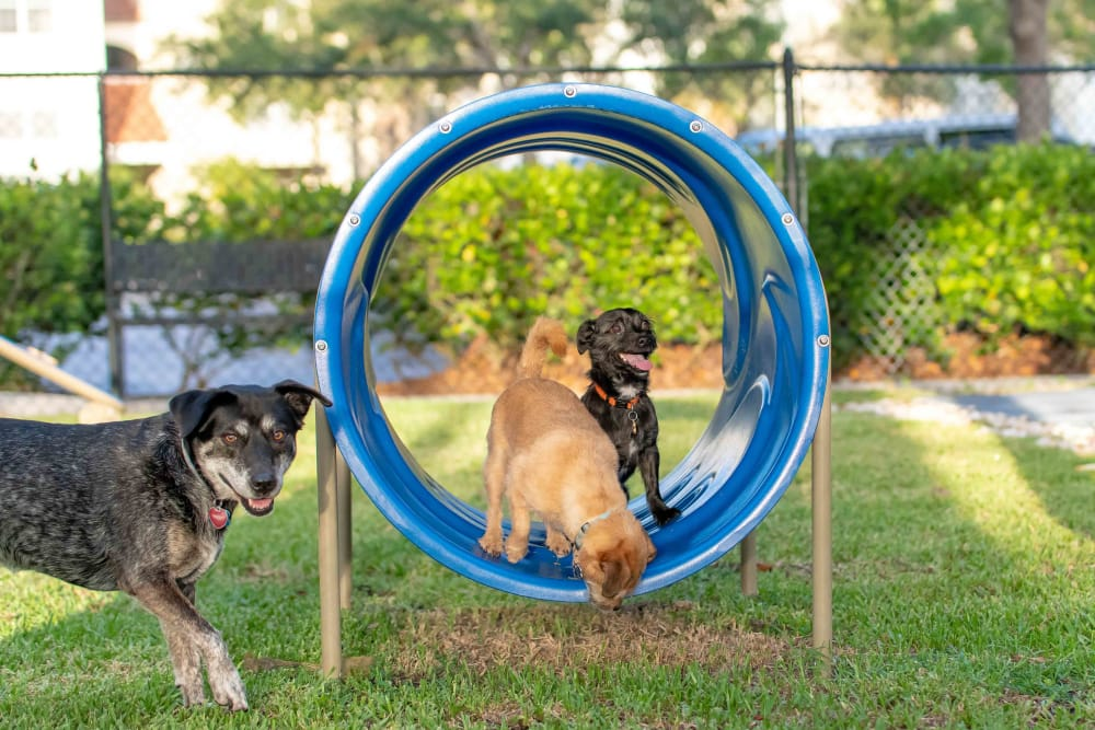 Our Apartments in Jupiter, Florida offer a Dog Park