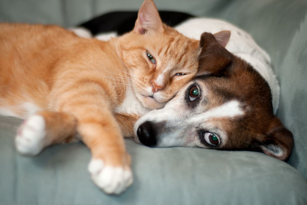 Dog and cat at lVillage Green Apartments in Baldwinsville