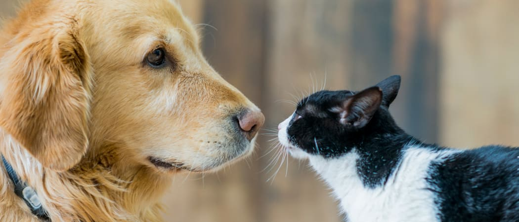Dog and cat becoming friends at Discovery Landing Apartment Homes in Burien, WA