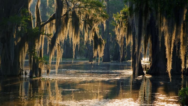Lush swampland at the Savannah National Wildlife Refuge near Walden at Chatham Center in Savannah, Georgia