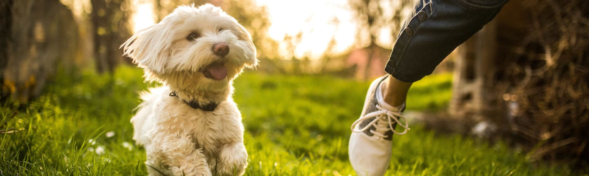 The Mark Parsippany's pet policy in Parsippany, New Jersey