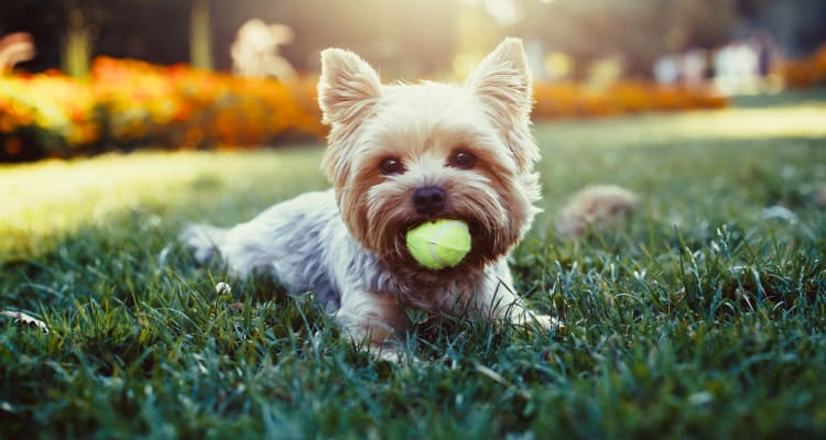 Adorable pet dog at Iris Apartments in Memphis, Tennessee