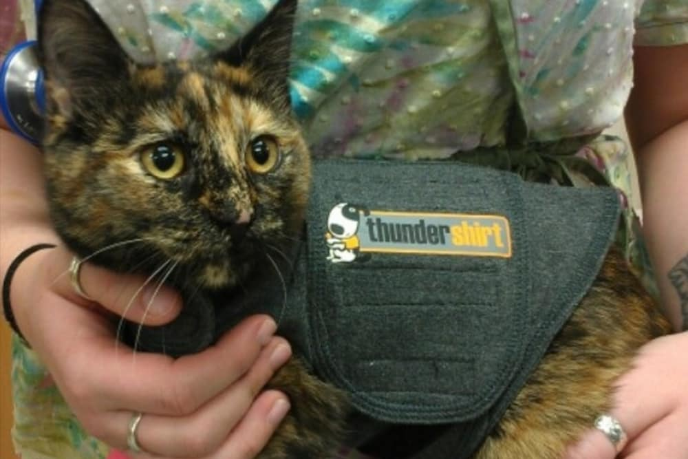 Kitty is wearing a cap at Angeles Clinic For Animals in Port Angeles, Washington