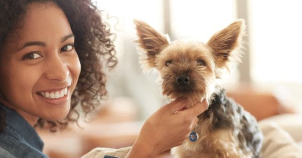 Pet-friendly community at The Carlyle Apartments in Baltimore
