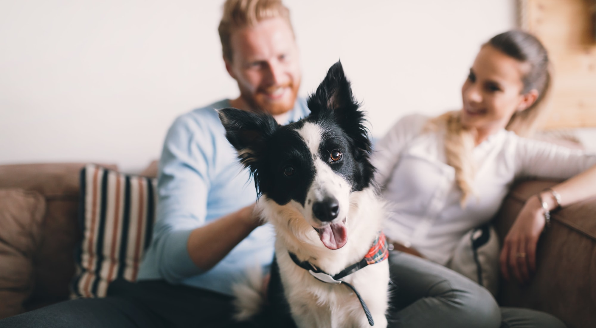 Pet-friendly apartments at Alexander Court in Reynoldsburg, Ohio