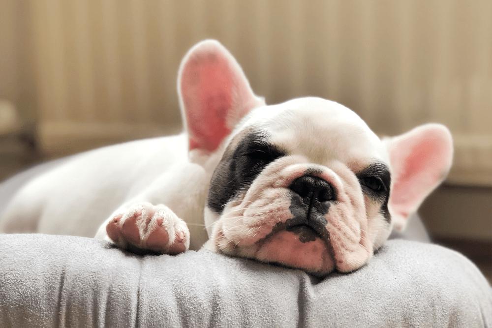 Happy dog in community property of Case & Associates