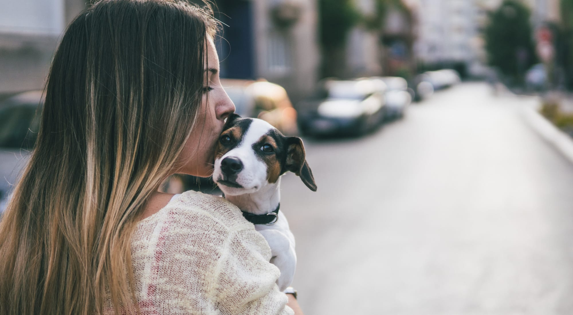 Pet-friendly apartments at Sofi Belmont Hills in Belmont, California