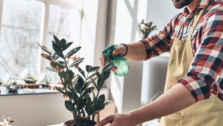 Close-up of a young man in an apron watering a potted plant while standing by a window in his home at {{location_name}}.