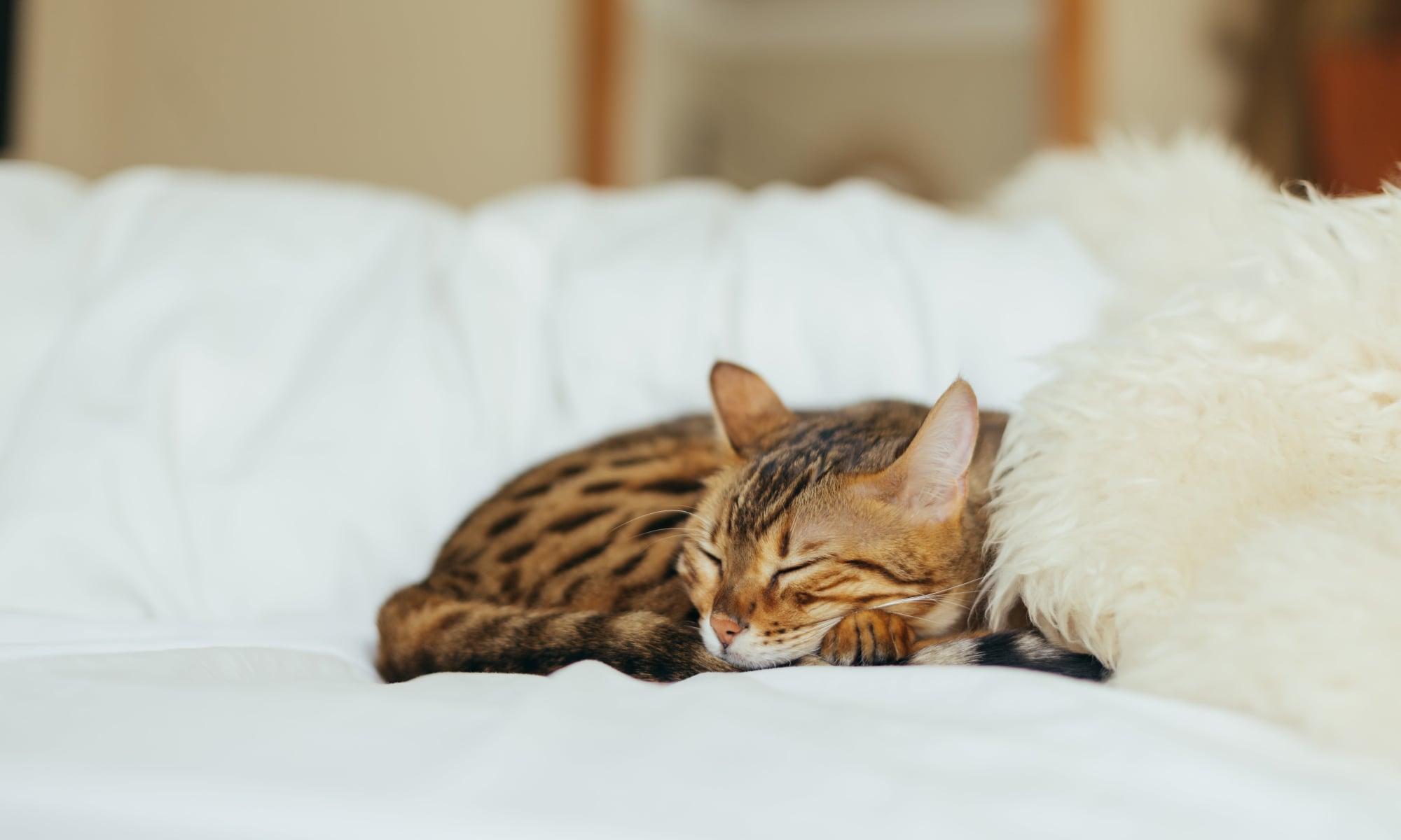 Cat sleeping happily at University Pet Resort in Merced