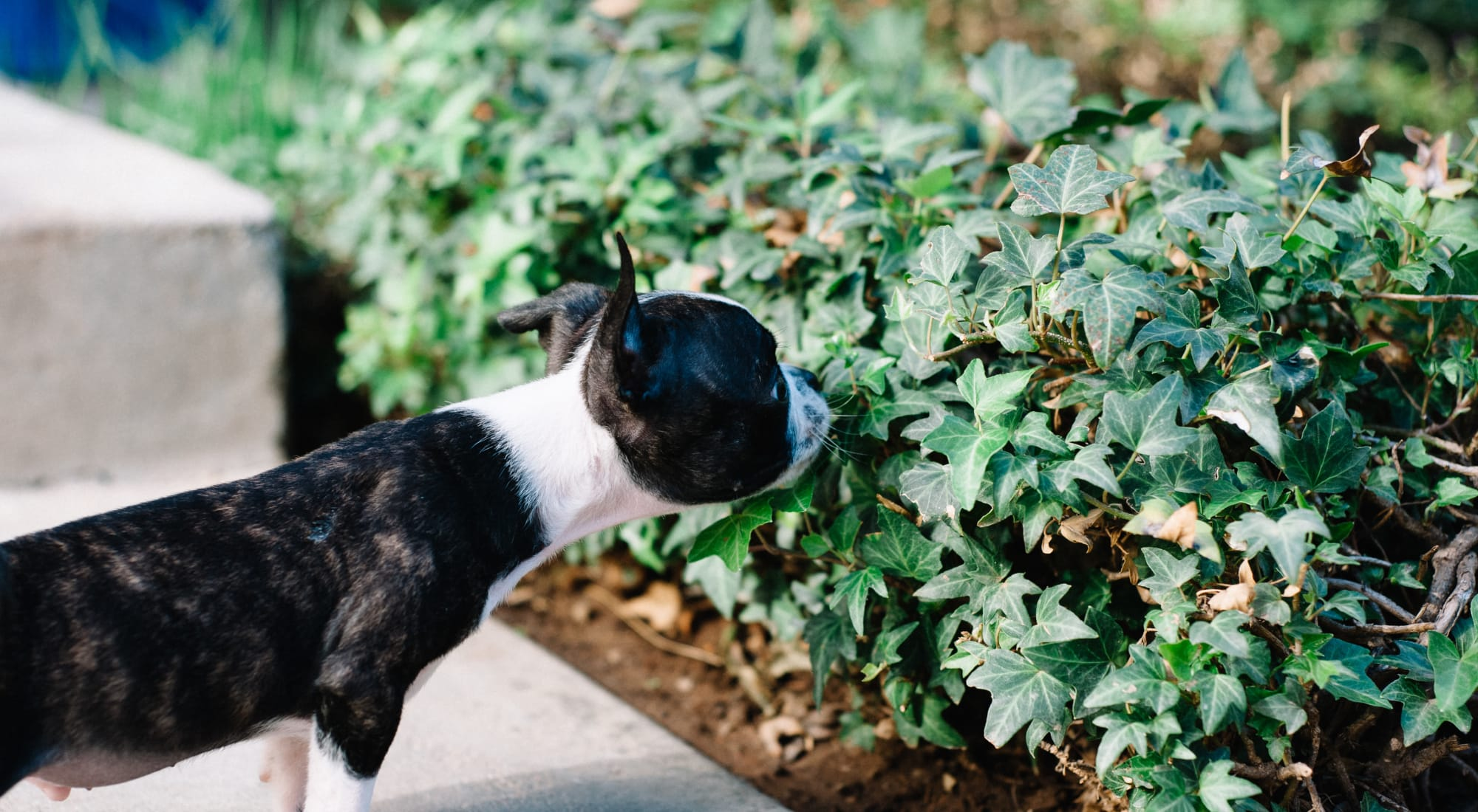 Pet-friendly apartments at Sofi at Forest Heights in Portland, Oregon