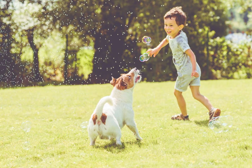 Kid playing with his dog at CHAI Fallstaff Apartments in Baltimore, Maryland