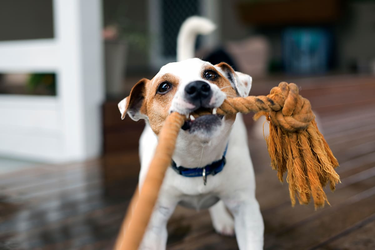 Pet friendly apartments with onsite dog park at The Pointe at Siena Ridge in Davenport, Florida
