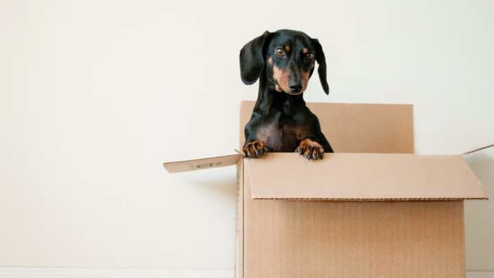 Tips For Planning A House Move